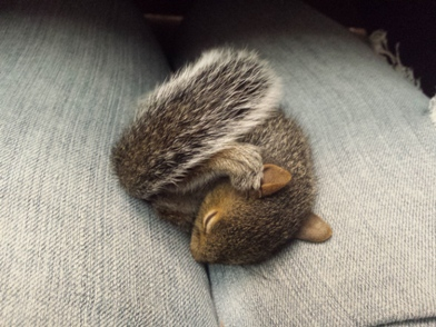 sleeping squirrel at auto body shop